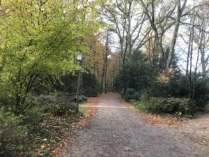 Blick auf Weg im Hamburger Stadtpark